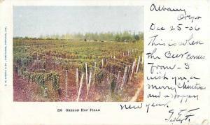 Oregon Hop Field OR 1906 Undivided Back Postcard