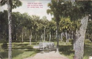 Florida St Johns Park View Of Palm Park and Alligator Pond 1911