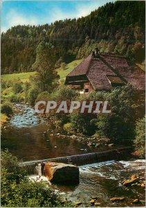 Postcard Modern Mauritius Canne a Sucre