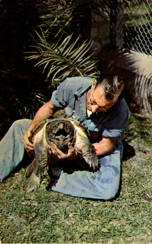 Texas San Antonio Brackenridge Park Alligator Gardens Alligator Snapping Turtle