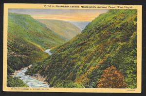 Mountains Blackwater Canyon Monongahela National Forest West Virginia Used c1945