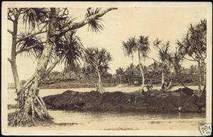 hawaii, HONOLULU, Panorama Palm Trees (1924) RPPC