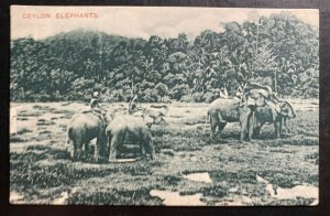 Mint Ceylon RPPC Real Picture Postcard Elephant Crossing The Jungle