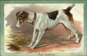 TUCK Fox Terrier Dog c1910 Embossed Postcard