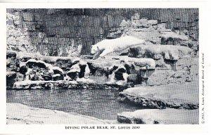 Diving Polar Bear      St Louis Zoo