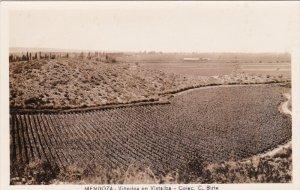 RP; MENDOZA, Argentina, 1920-1940's; Vinedos En Vistalba