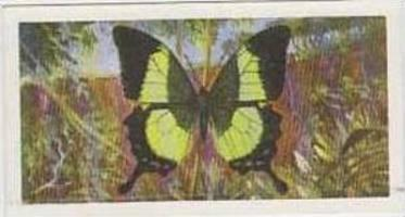 Brooke Bond Tea Vintage Trade Card Butterflies Of The World No 15 Papilio Bud...
