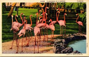 Birds Flamingos In A Garden Miami Beach Florida