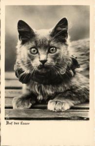Cat Postcard (1930s) RPPC (1)