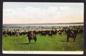 Beef Herd Going to Water – Chinock, MT  - Morris card