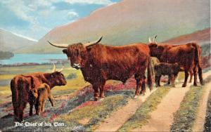 HIGHLAND CATTLE-SCOTLAND-THE CHIEF OF HIS CLAN POSTCARD 1910s