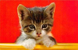 Kitten Cat Unused