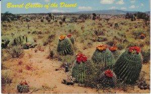 Vtg 1968 Barrel Cactus of the Desert New Mexico Postcard