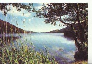 Scotland Postcard - Loch Lomond at Tarbet - Dunbartonshire - Ref 18515A