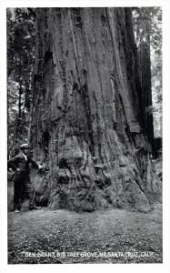 17971  CA Santa Cruz  General Grant  Big   Tree  RPC