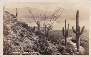Arizona Cactus Along Roosevelt Lake Real Photo