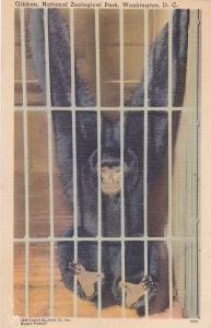 Gibbon, National Zoological Park, WASHINGTON D.C. , 30-40s