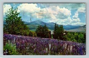 Jefferson NH- New Hampshire, Lupine Blossoms, White Mt., Chrome c1955Postcard