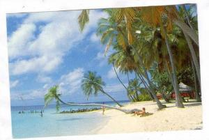 Beach side view, Maldive Islands, 50-70s