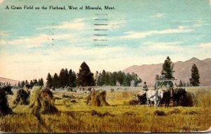 Montana Missoula A Grainfield On The Flathead 1925 Curteich