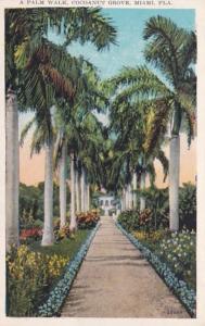 Florida Miami Cocoanut Grove Beautiful Palm Walk