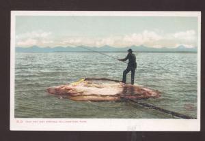 YELLOWSTONE NATIONAL PARK MONTANA FISH POT HOT SPRINGS VINTAGE POSTCARD