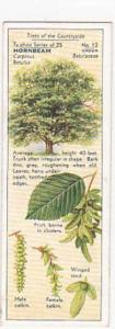 Typhoo Tea Vintage Trade Card Trees Of The Countryside 1936 No 12 Hornbeam