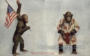 Chimpanzee, New York Zoological Park New York, USA Postcard Post Cards Old Vi...