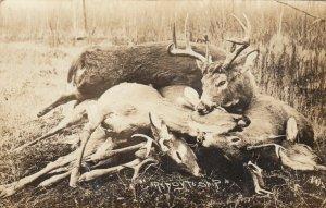 RP: MARSHFIELD , Wisconsin, 1908 ; Deer , Ready to ship