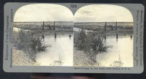 REAL PHOTO SOUTH CAROLINA RICE FIELD FLOODING FARMING FARM STEREOVIEW CARD