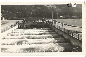 Fish Ladder of Bonneville Dam Oregon Vintage Real Photograph Postcard by Sawyer