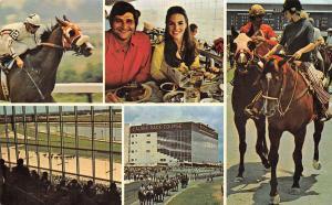 Fla. Miami, Calder Race Course, bred racing Multiviews