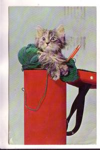 Gray Kitten with Yarn and Knitting Needles, You Catched Me!!, Manhattan Post ...
