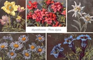 Alpenblumen - Flora alpina, Schwefelgelbe Alpenanemone, Alpenrose, Edelweiss