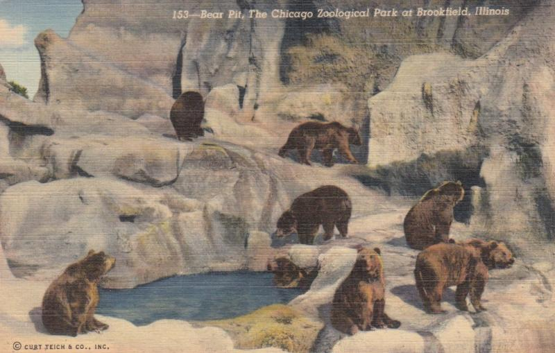 CHICAGO , Illinois , 30-40s ; Bear Pit at Zoo