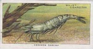 Wills Vintage Cigarette Card The Sea-Shore No 26 Common Shrimp  1938