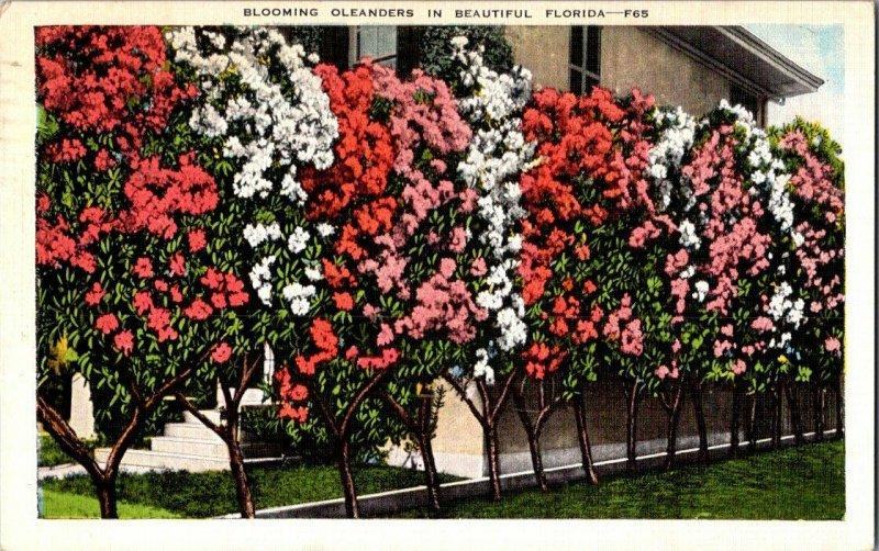 Blooming Oleanders Beautiful Florida Vintage Postcard Standard View Card