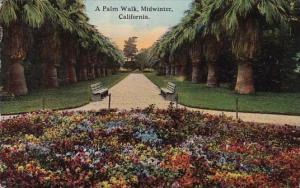 California Midwinter A Palm Walk 1913