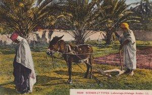 Donkey , Scenes et Types - Labourage Attelage Arabe, 00-10s