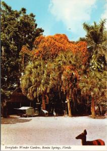 Everglades Wonder Gardens Bonita Springs FL Florida Unused Postcard D54