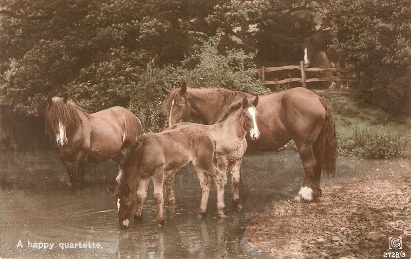 Horses and foals. A happy quartette  Nice old vintage German postcard