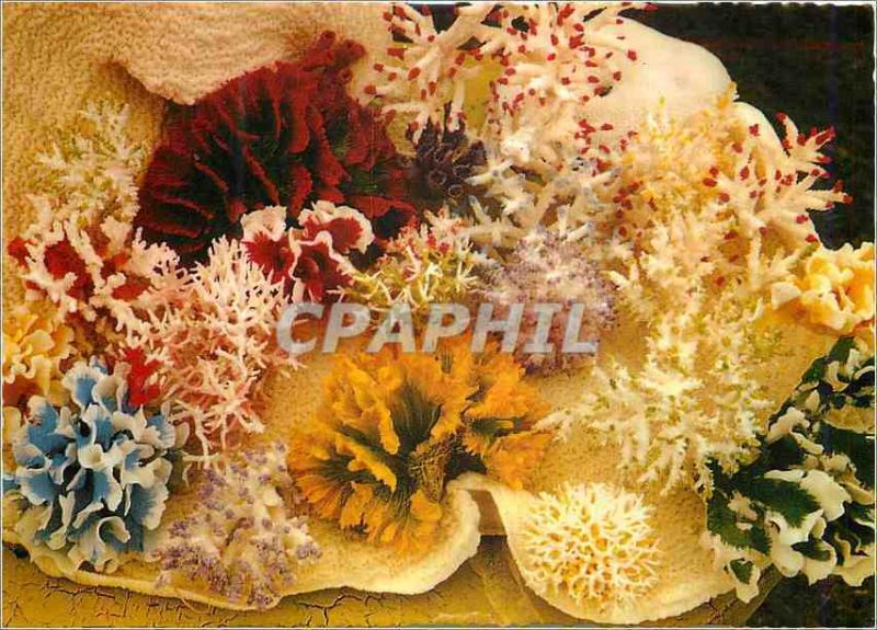 Modern Postcard Australia Selected coral of the Great Barrier Reef