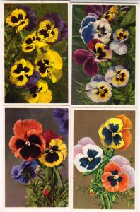 4 - Cards with Pansies, Pansy, Pensee, Panzee