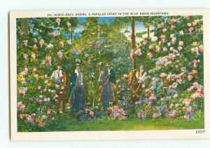 Vintage Postcard 68 Horseback Riding Riders Blue Ridge Mountains # 1957