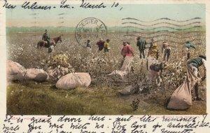 Picking Cotton, PU-1906