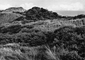 De Duinen Les Dunes Landscape Postcard