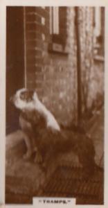 Tramp Dog Dogs On Doorstep Antique Real Photo Cigarette Card