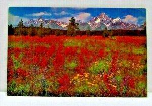 A Carpet of Wildflowers Grand Teton National Park Wyoming Vintage Postcard