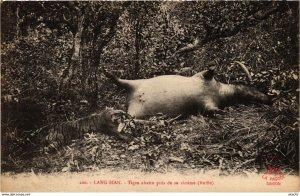 CPA INDOCHINA Lang Bian Tigre abattu pres de sa victime VIETNAM (958259)