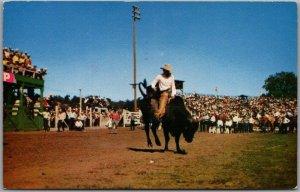 Vintage 1961 RODEO SCENE Postcard Ride 'em Cowboy w/ Williston ND Cancel
